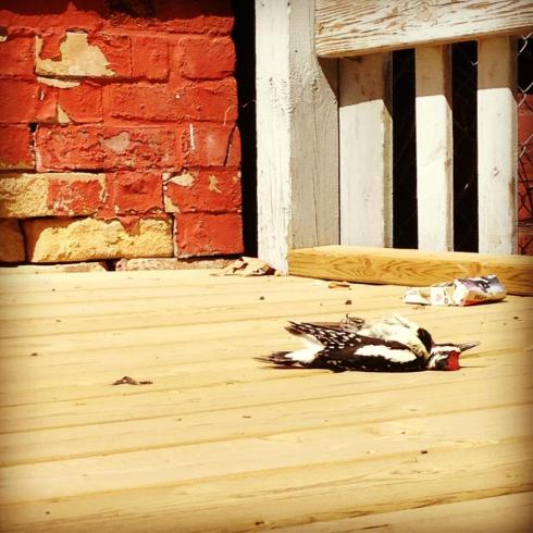 Dead Bird at Abandoned House.  Photo by Matthew Roy